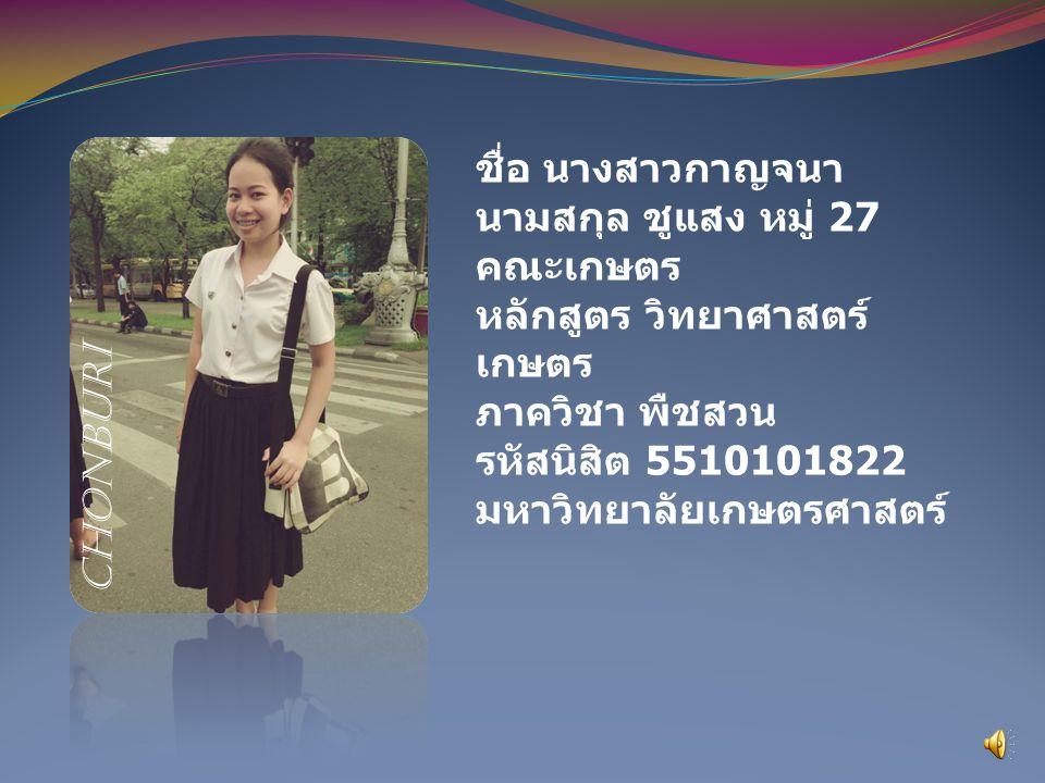 ชื่อ นางสาวกาญจนา นามสกุล ชูแสง หมู่ 27 คณะเกษตร หลักสูตร วิทยาศาสตร์ เกษตร ภาควิชา พืชสวน รหัสนิสิต 5510101822 มหาวิทยาลัยเกษตรศาสตร์ chonburi
