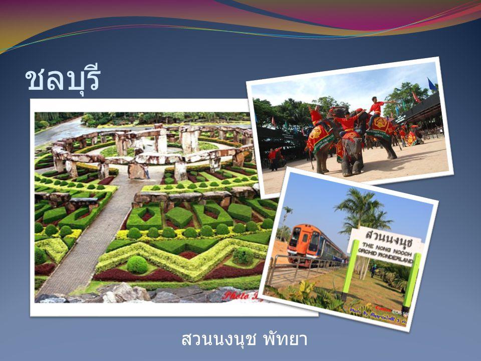 ชลบุรี สวนนงนุช พัทยา