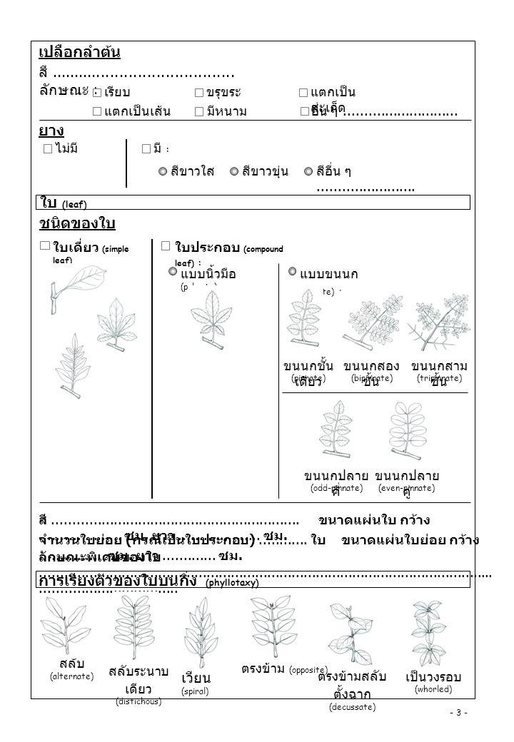 รูปร่างแผ่นใบ (leaf shape) รูปแถบ (linear) รูปลิ่มแคบ ( subulate) รูปเข็ม (acicular) รูปขอบขนาน (oblong) รูปรี (elliptic) รูปใบหอก (lanceolate) รูปใบหอก กลับ (oblanceolate) รูปไข่กลับ (obovate) รูปวงกลม (orbicular) รูปหัวใจ (cordate) รูปไต (reniform) รูปเคียว (falcate) อื่นๆ รูปสี่เหลี่ยมข้าว หลามตัด (rhomboid) รูปหัวลูกศร (sagittate) รูปเงี่ยงใบ หอก (hastate) รูปช้อน (spathulate) รูป สามเหลี่ย ม (deltoid) ปลายใบ (leaf apex) เรียวแหลม (acuminate) แหลม (acute) ติ่งหนาม (mucronate) แหลมเข็ม มีรยางค์ แข็ง (aristate) ยาวคล้าย หาง (caudate) ม้วน (cirrate) มน (obtuse) หัวใจกลับ (obcordate) เว้าตื้น (emarginate) ตัด (truncate) เว้าบุ๋ม (retuse) เบี้ยว (oblique) รูปลิ่ม (cuneate) มน (obtuse) ตัด (truncate) รูปหัวใจ (caudate) รูปเงี่ยง ลูกศร (sagittate) รูปเงี่ยงใบ หอก (hastate) รอบข้อ (perfoliate) แบบก้นปิด (peltate) รูปติ่งหู (auriculate) โคนใบ (leaf base) รูปไข่ (ovate) ติ่งแหลม (cuspidate) อื่นๆ..................