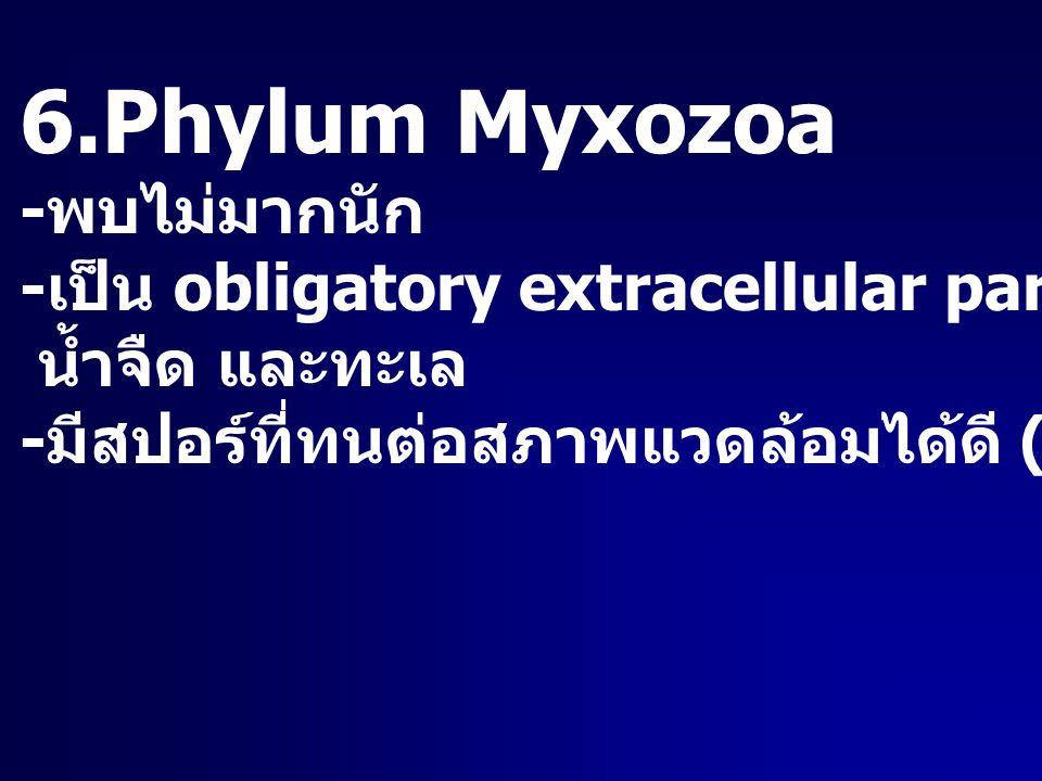 6.Phylum Myxozoa - พบไม่มากนัก - เป็น obligatory extracellular parasite ในพวกปลา น้ำจืด และทะเล - มีสปอร์ที่ทนต่อสภาพแวดล้อมได้ดี (resistant spore)