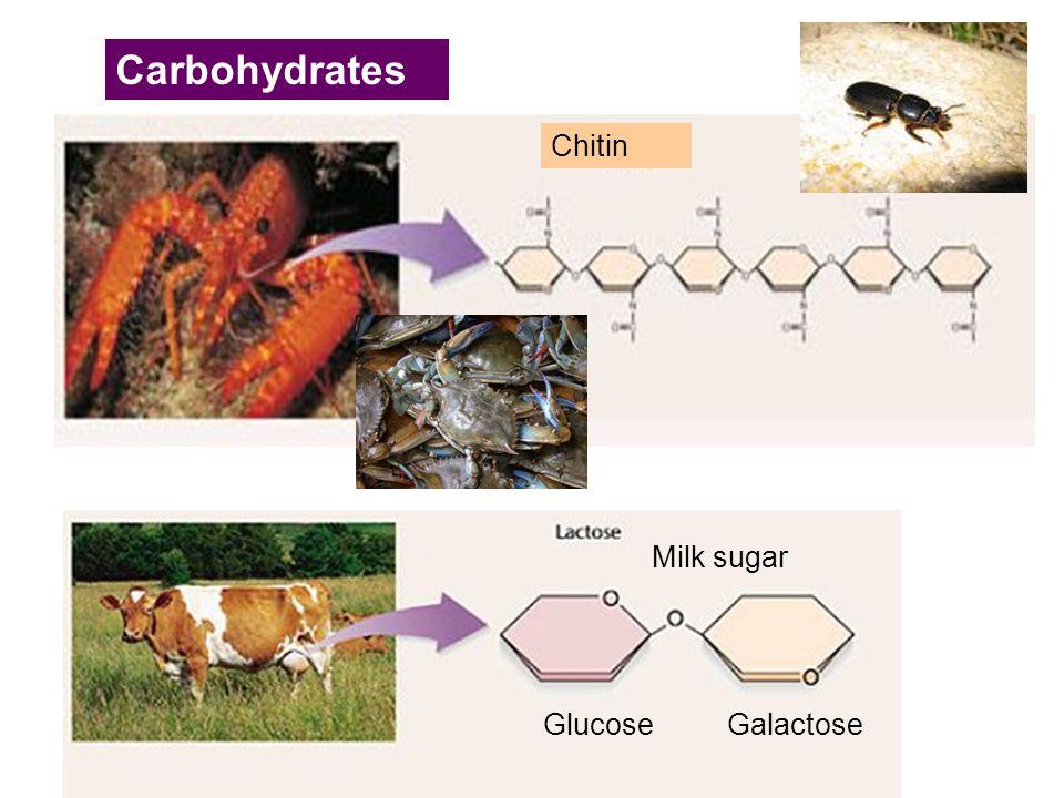 Chitin Carbohydrates GlucoseGalactose Milk sugar