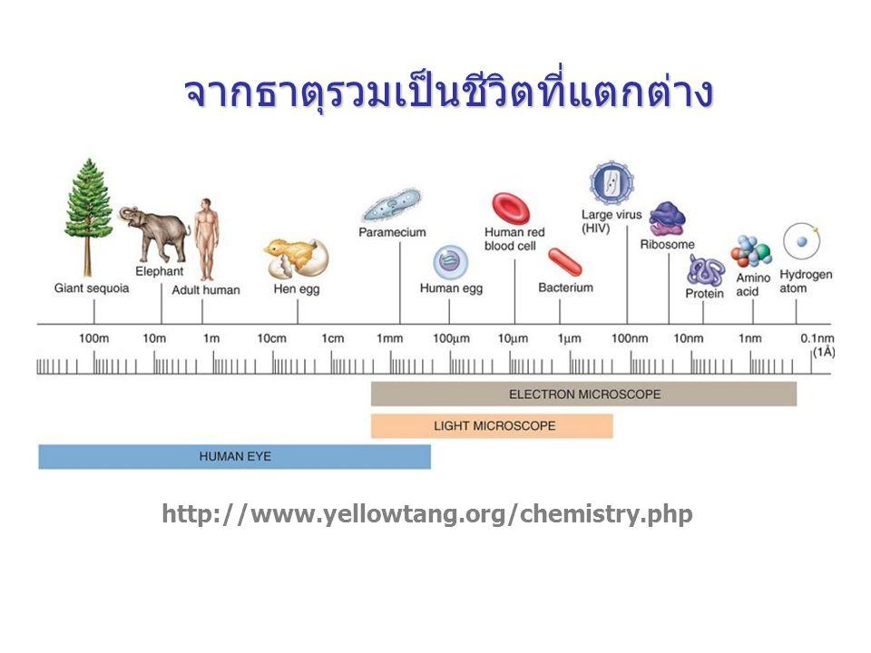 http://www.yellowtang.org/chemistry.php จากธาตุรวมเป็นชีวิตที่แตกต่าง