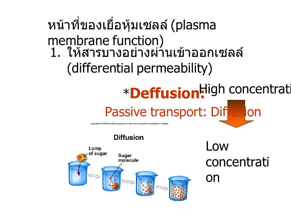 หน้าที่ของเยื่อหุ้มเซลล์ (plasma membrane function) 1. ให้สารบางอย่างผ่านเข้าออกเซลล์ (differential permeability) * Deffusion: Low concentrati on Pass