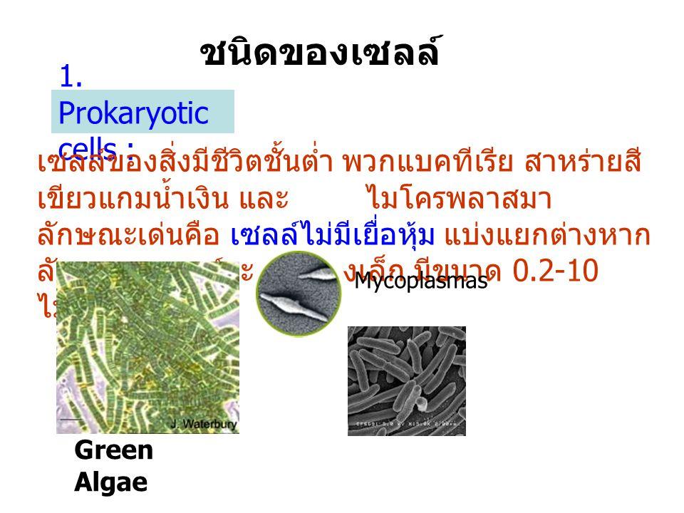 ชนิดของเซลล์ 1. Prokaryotic cells : เซลล์ของสิ่งมีชีวิตชั้นต่ำ พวกแบคทีเรีย สาหร่ายสี เขียวแกมน้ำเงิน และ ไมโครพลาสมา ลักษณะเด่นคือ เซลล์ไม่มีเยื่อหุ้