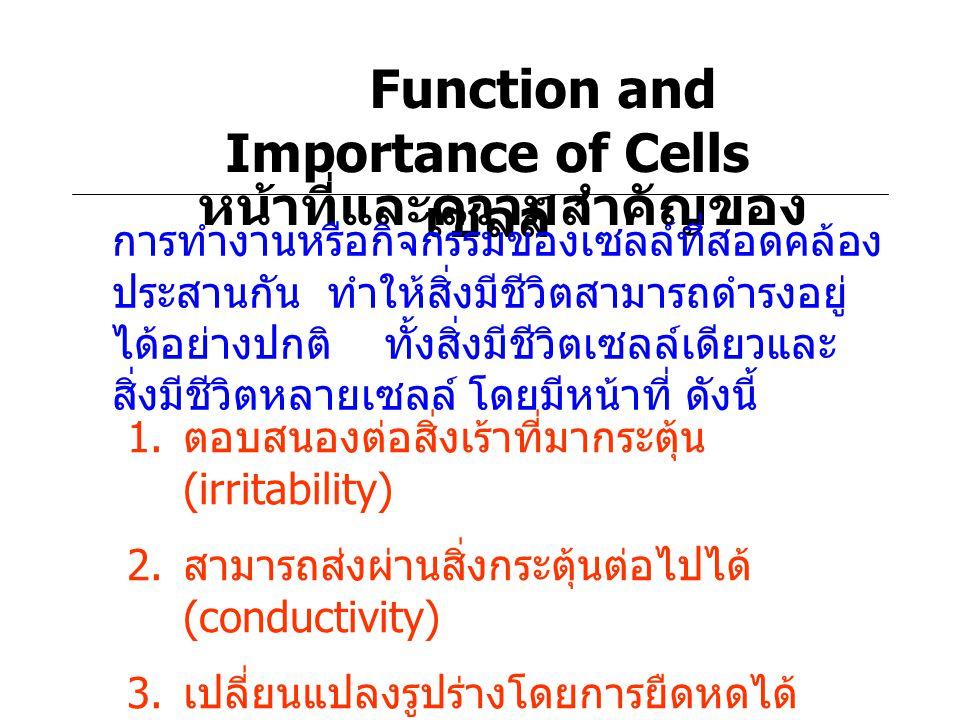 Function and Importance of Cells หน้าที่และความสำคัญของ เซลล์ การทำงานหรือกิจกรรมของเซลล์ที่สอดคล้อง ประสานกัน ทำให้สิ่งมีชีวิตสามารถดำรงอยู่ ได้อย่าง