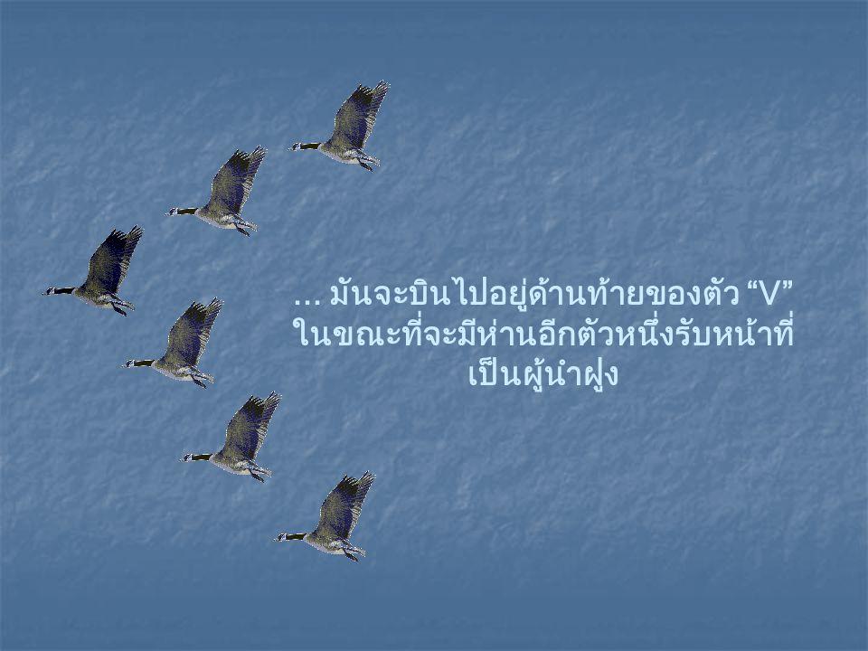 เมื่อผู้นำของฝูงห่านเริ่มอ่อนล้า ภายหลังจากบินมานาน…