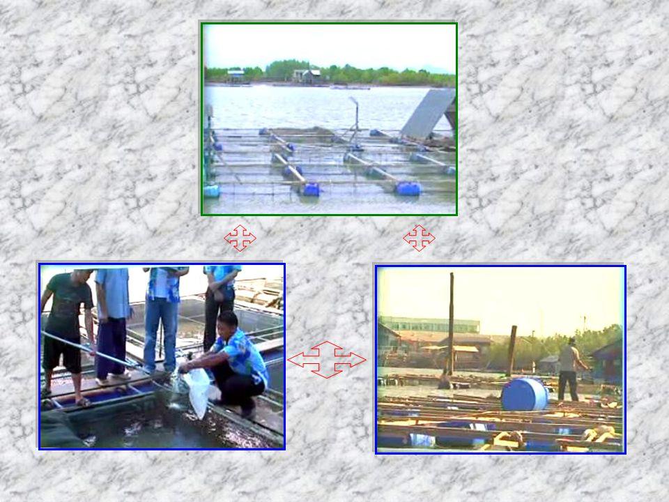 รูปแบบของกระชังเลี้ยง ปลา แบ่งตามลักษณะของโครงสร้าง ได้ 2 แบบ คือ 1.