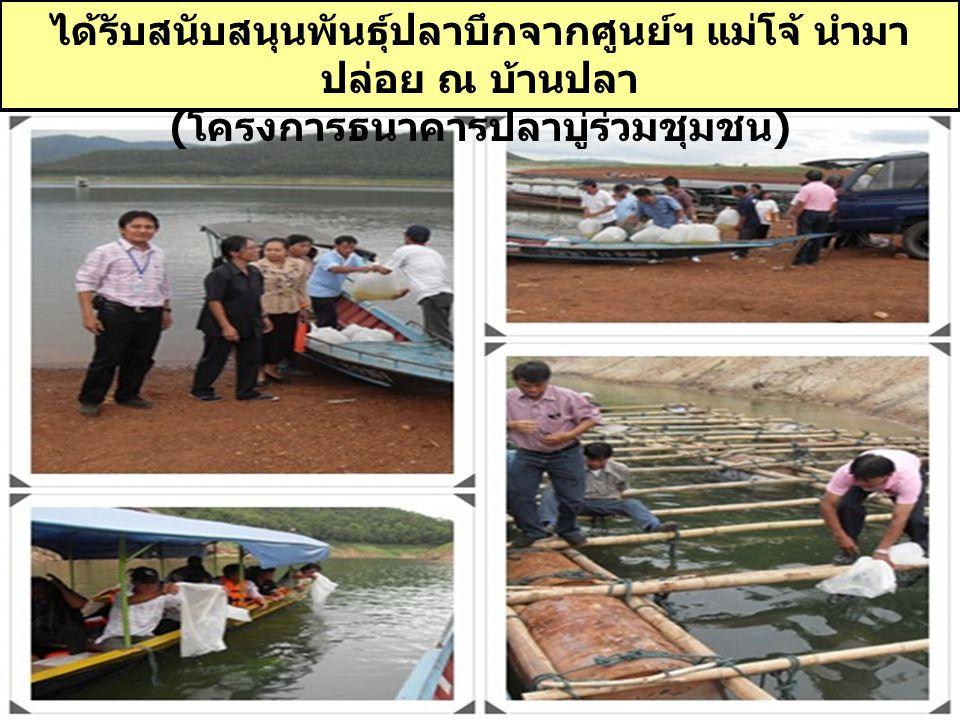 ได้รับสนับสนุนพันธุ์ปลาบึกจากศูนย์ฯ แม่โจ้ นำมา ปล่อย ณ บ้านปลา ( โครงการธนาคารปลาบู่ร่วมชุมชน )