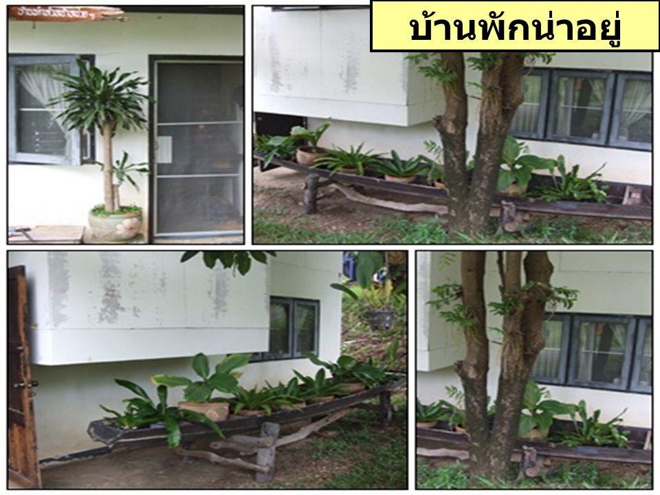 หลังบ้านมีผัก สวนครัว