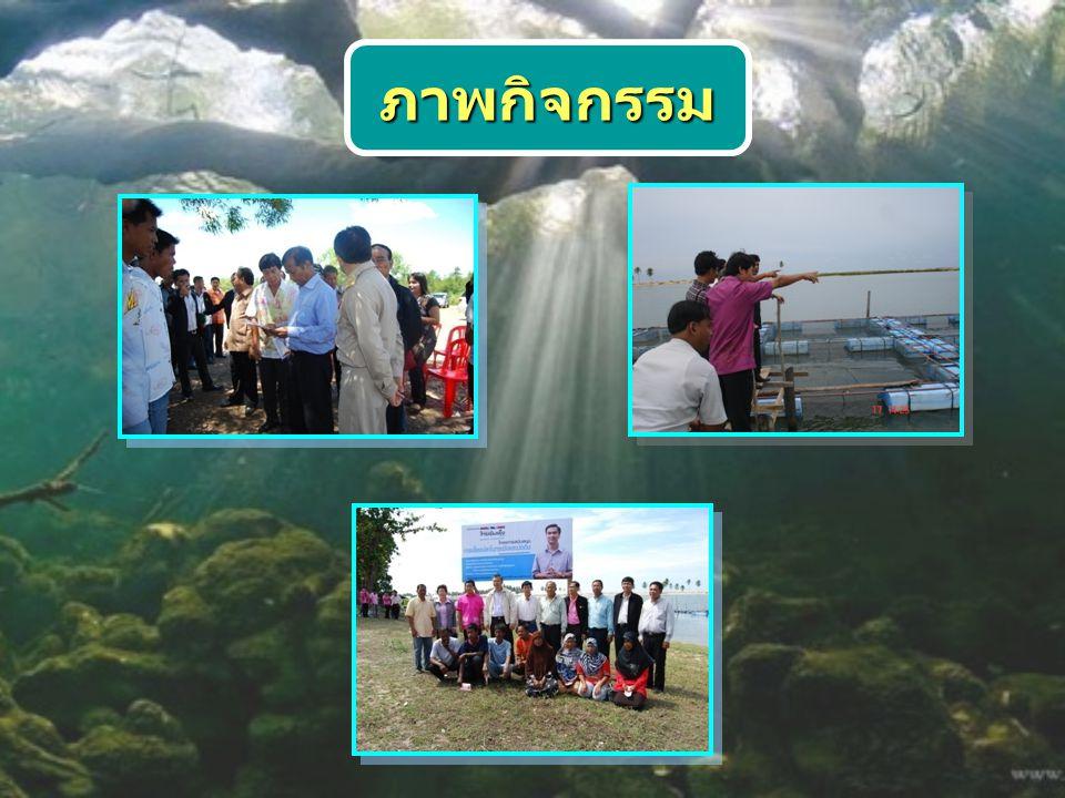 ภาพกิจกรรม การทยอยจับผลผลิตปลา กะพงขาวในกระชัง
