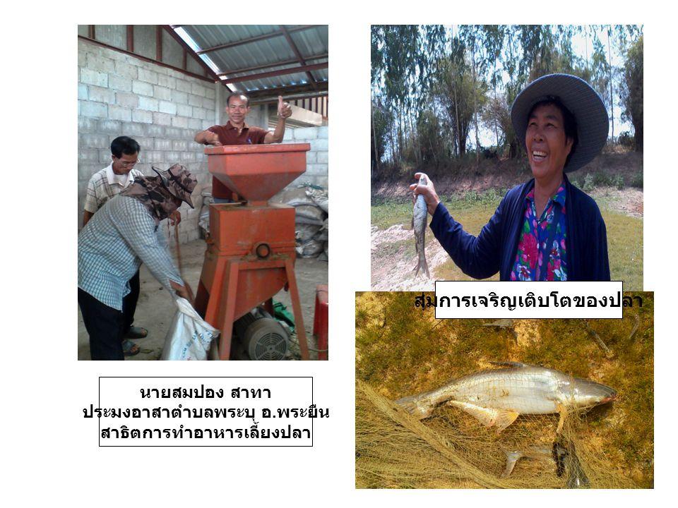 นายสมปอง สาทา ประมงอาสาตำบลพระบุ อ. พระยืน สาธิตการทำอาหารเลี้ยงปลา สุ่มการเจริญเติบโตของปลา
