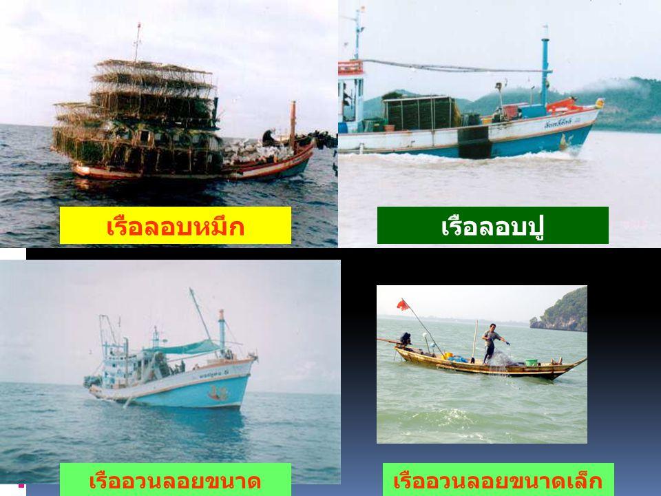 เรือลอบหมึกเรือลอบปู เรืออวนลอยขนาดเล็กเรืออวนลอยขนาด ใหญ่