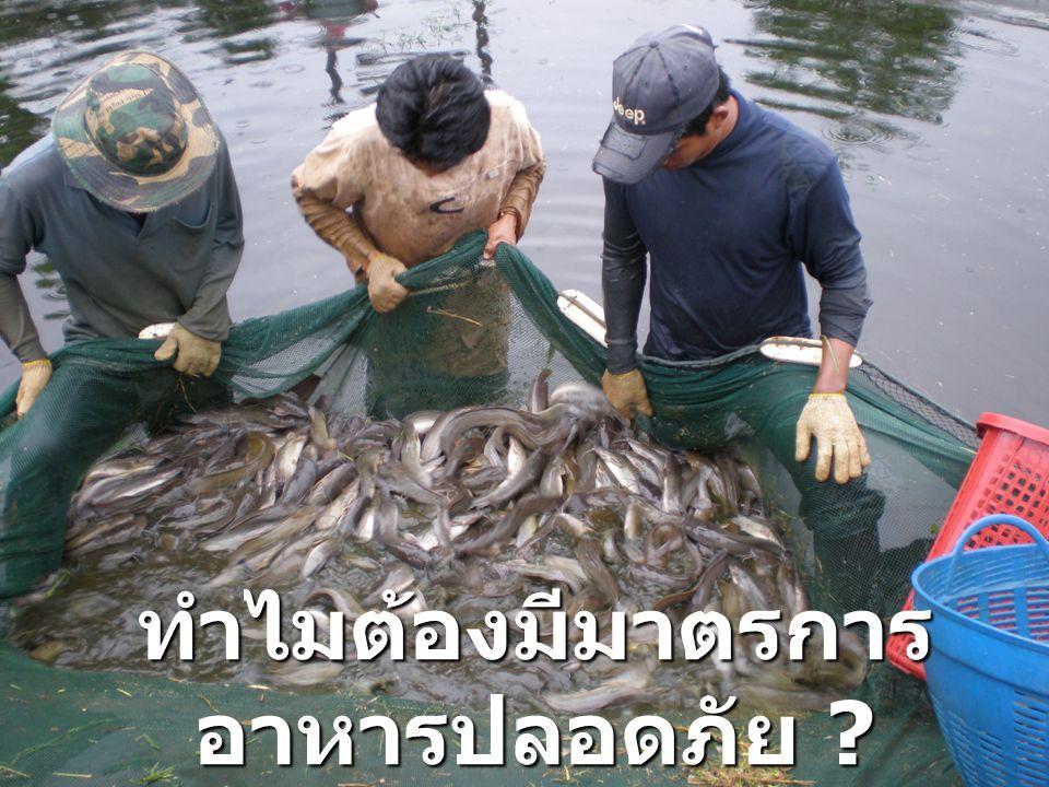 - เพื่อจัดการ กระบวนการผลิต ทั้งระบบให้เข้าสู่ มาตรฐาน เดียวกัน - เพื่อจัดการ คุณภาพของสินค้า การเกษตรและ อาหารของไทย ที่ส่งออกไปขาย ต่างประเทศ