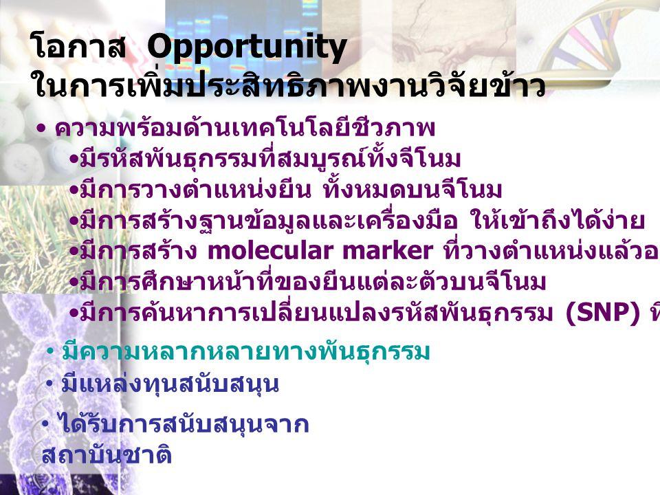 โอกาส Opportunity ในการเพิ่มประสิทธิภาพงานวิจัยข้าว ความพร้อมด้านเทคโนโลยีชีวภาพ มีรหัสพันธุกรรมที่สมบูรณ์ทั้งจีโนม มีการวางตำแหน่งยีน ทั้งหมดบนจีโนม