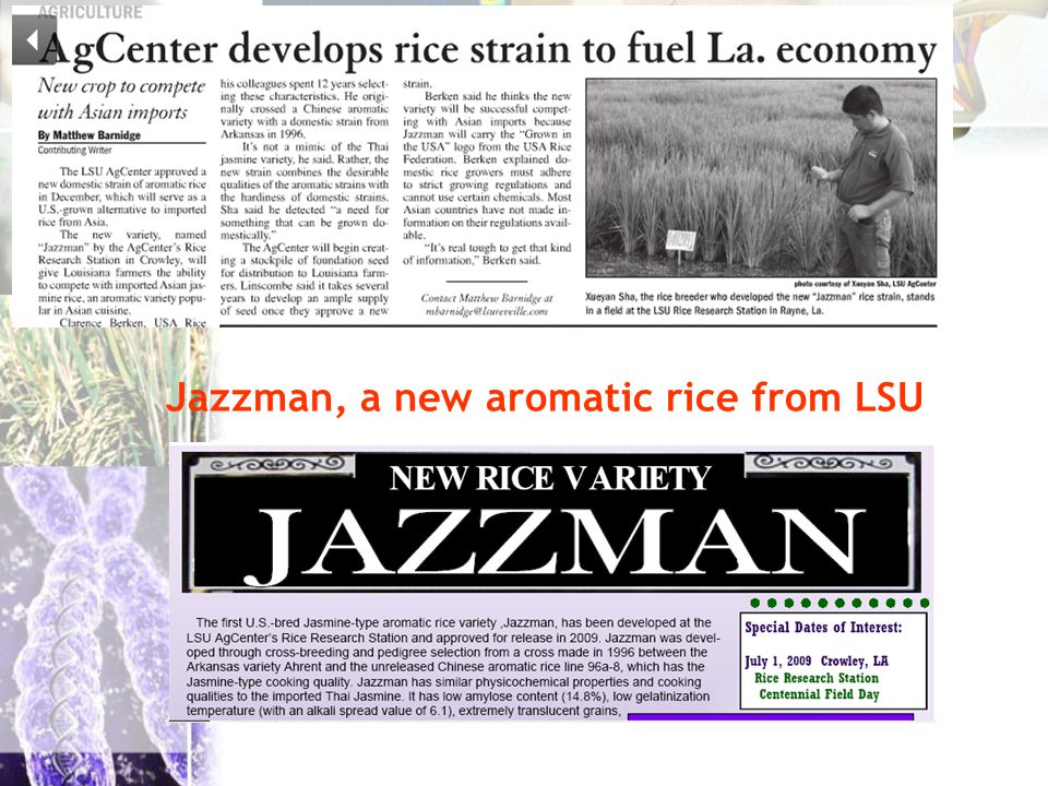 Jazzman, a new aromatic rice from LSU