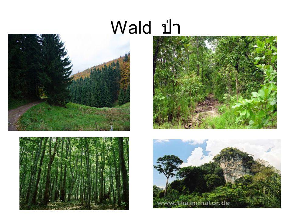 Wald ป่า
