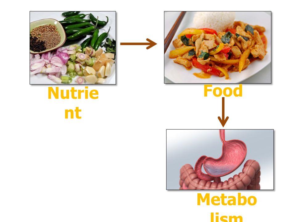 Nutrie nt Food Metabo lism