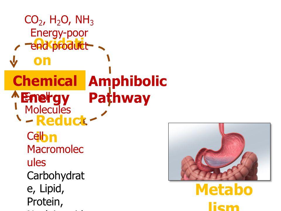Nutrie nt Food Metabo lism Energy, Cell Macromolecules