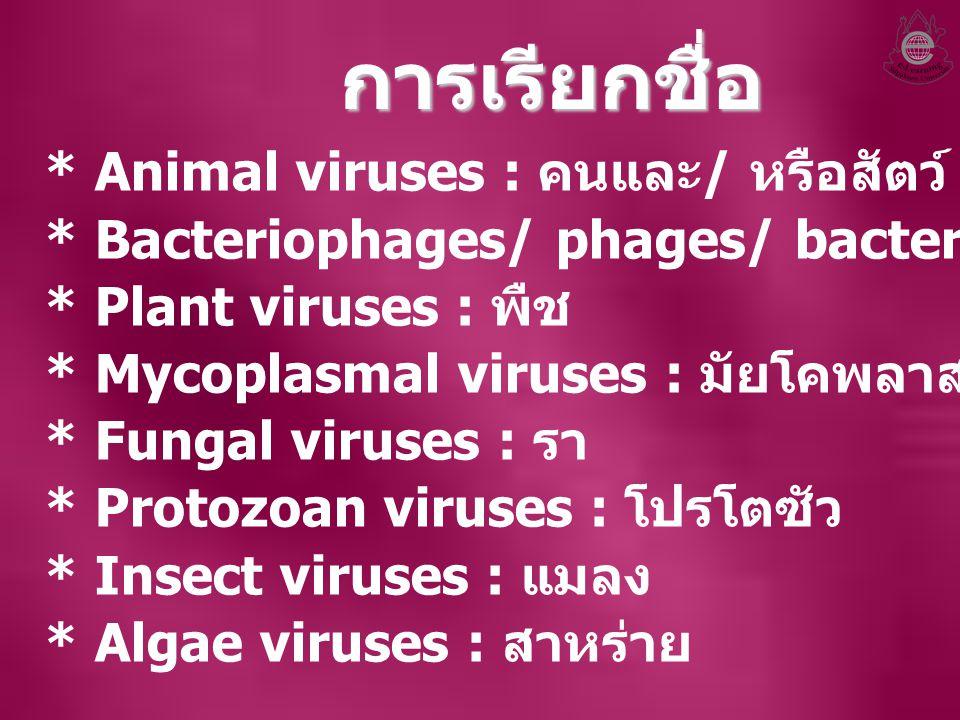 การเรียกชื่อ * Animal viruses : คนและ / หรือสัตว์ * Bacteriophages/ phages/ bacterial viruses : แบคทีเรีย * Plant viruses : พืช * Mycoplasmal viruses