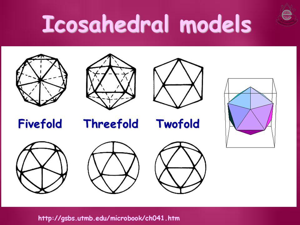 Icosahedral models FivefoldThreefoldTwofold http://gsbs.utmb.edu/microbook/ch041.htm