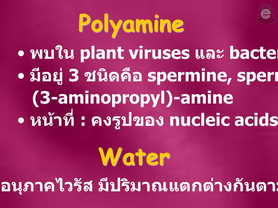 Polyamine พบใน plant viruses และ bacteriophage มีอยู่ 3 ชนิดคือ spermine, spermidine และ Bis- (3-aminopropyl)-amine หน้าที่ : คงรูปของ nucleic acids W