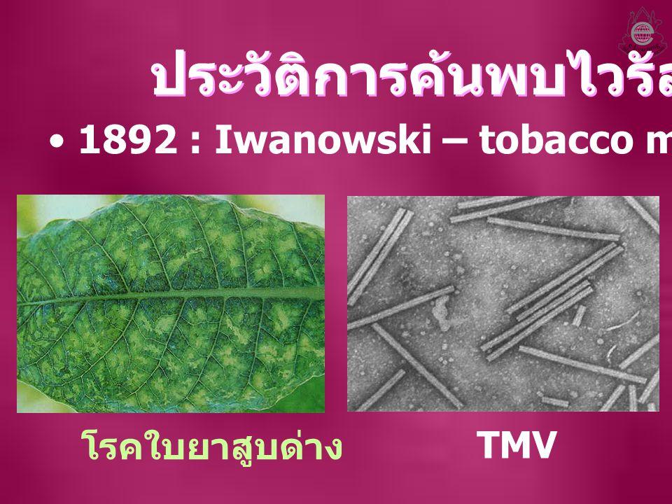 1892 : Iwanowski – tobacco mosaic virus (TMV) ประวัติการค้นพบไวรัส โรคใบยาสูบด่าง TMV