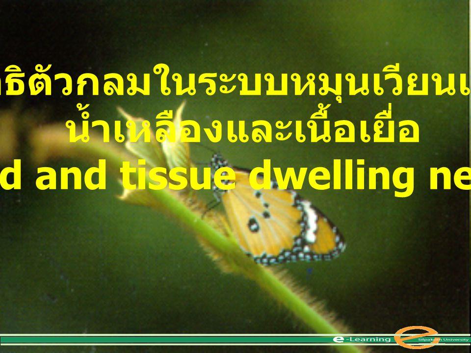 พยาธิตัวกลมในระบบหมุนเวียนเลือด น้ำเหลืองและเนื้อเยื่อ (The blood and tissue dwelling nematodes)