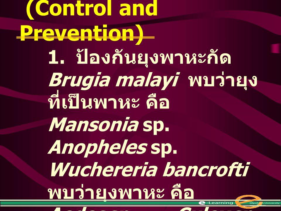 การควบคุมและป้องกัน (Control and Prevention) 1. ป้องกันยุงพาหะกัด Brugia malayi พบว่ายุง ที่เป็นพาหะ คือ Mansonia sp. Anopheles sp. Wuchereria bancrof