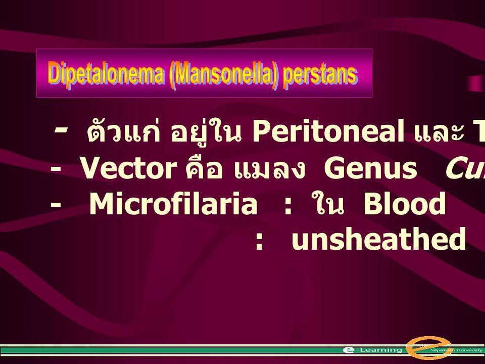 - ตัวแก่ อยู่ใน Peritoneal และ Thoracic cavities - Vector คือ แมลง Genus Culicoides - Microfilaria : ใน Blood : unsheathed