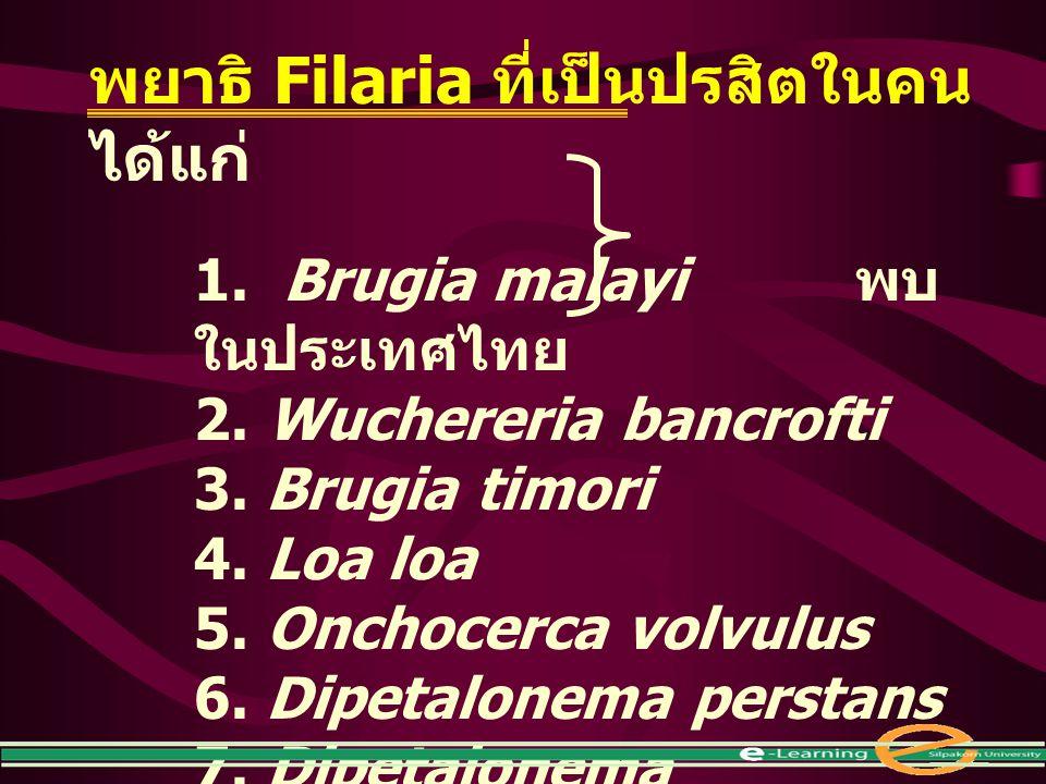พยาธิ Filaria ที่เป็นปรสิตในคน ได้แก่ 1. Brugia malayi พบ ในประเทศไทย 2. Wuchereria bancrofti 3. Brugia timori 4. Loa loa 5. Onchocerca volvulus 6. Di