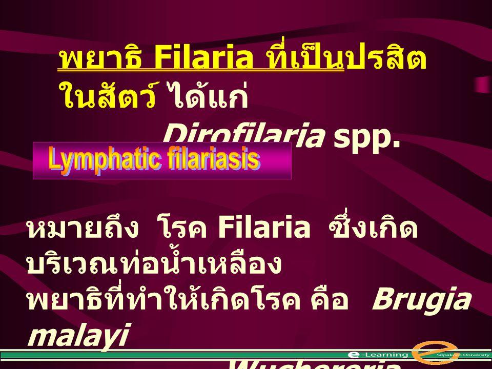 พยาธิ Filaria ที่เป็นปรสิต ในสัตว์ ได้แก่ Dirofilaria spp. หมายถึง โรค Filaria ซึ่งเกิด บริเวณท่อน้ำเหลือง พยาธิที่ทำให้เกิดโรค คือ Brugia malayi Wuch