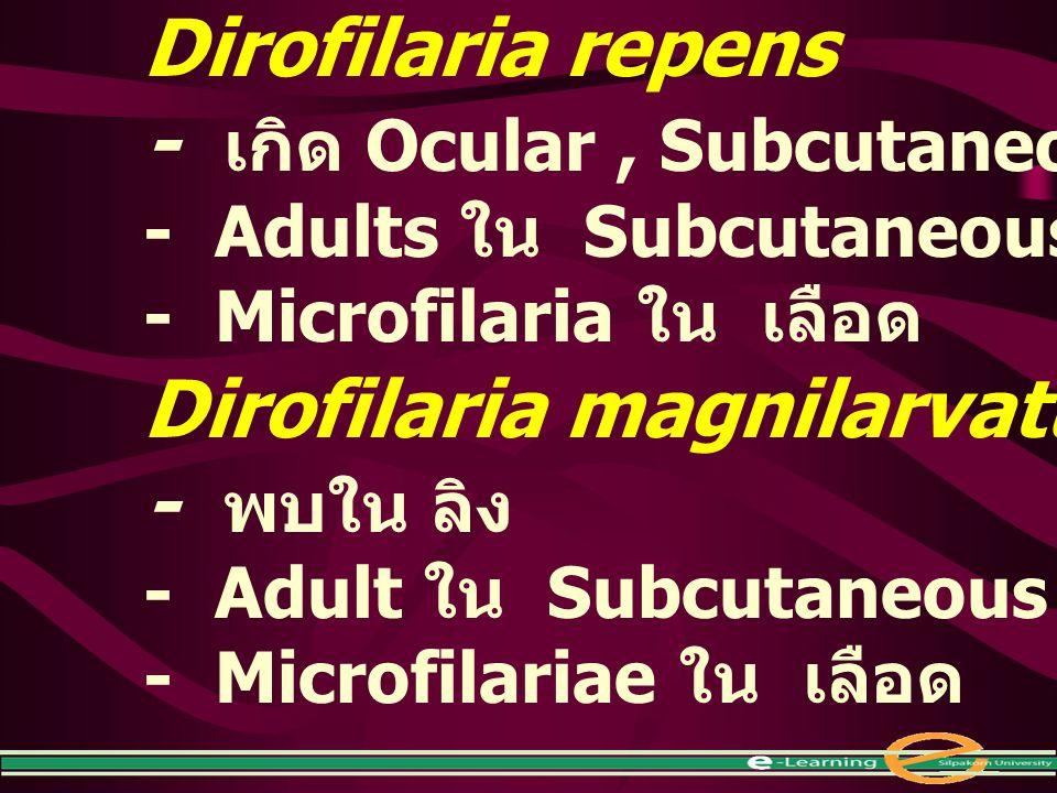 Dirofilaria repens - เกิด Ocular, Subcutaneous ใน คน - Adults ใน Subcutaneous tissues - Microfilaria ใน เลือด Dirofilaria magnilarvatum - พบใน ลิง - A