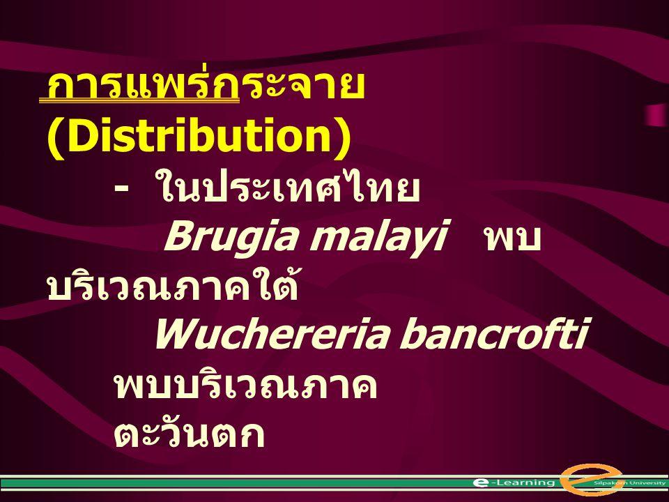 การแพร่กระจาย (Distribution) - ในประเทศไทย Brugia malayi พบ บริเวณภาคใต้ Wuchereria bancrofti พบบริเวณภาค ตะวันตก