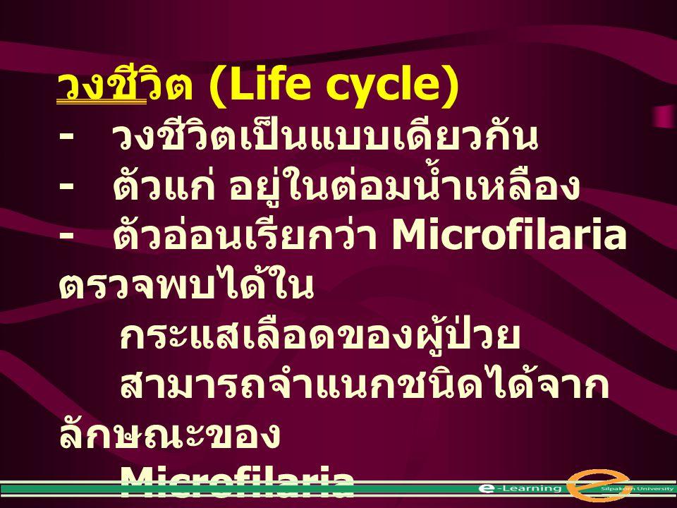 วงชีวิต (Life cycle) - วงชีวิตเป็นแบบเดียวกัน - ตัวแก่ อยู่ในต่อมน้ำเหลือง - ตัวอ่อนเรียกว่า Microfilaria ตรวจพบได้ใน กระแสเลือดของผู้ป่วย สามารถจำแนก