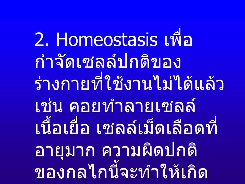 2. Homeostasis เพื่อ กำจัดเซลล์ปกติของ ร่างกายที่ใช้งานไม่ได้แล้ว เช่น คอยทำลายเซลล์ เนื้อเยื่อ เซลล์เม็ดเลือดที่ อายุมาก ความผิดปกติ ของกลไกนี้จะทำให