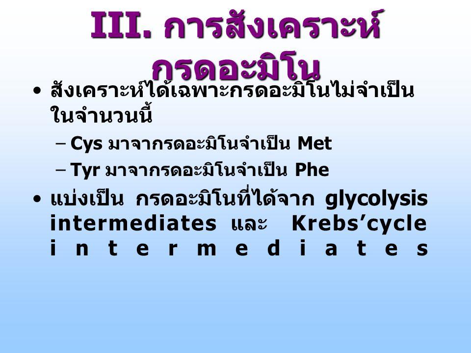 III. การสังเคราะห์ กรดอะมิโน สังเคราะห์ได้เฉพาะกรดอะมิโนไม่จำเป็น ในจำนวนนี้ –Cys มาจากรดอะมิโนจำเป็น Met –Tyr มาจากรดอะมิโนจำเป็น Phe แบ่งเป็น กรดอะม