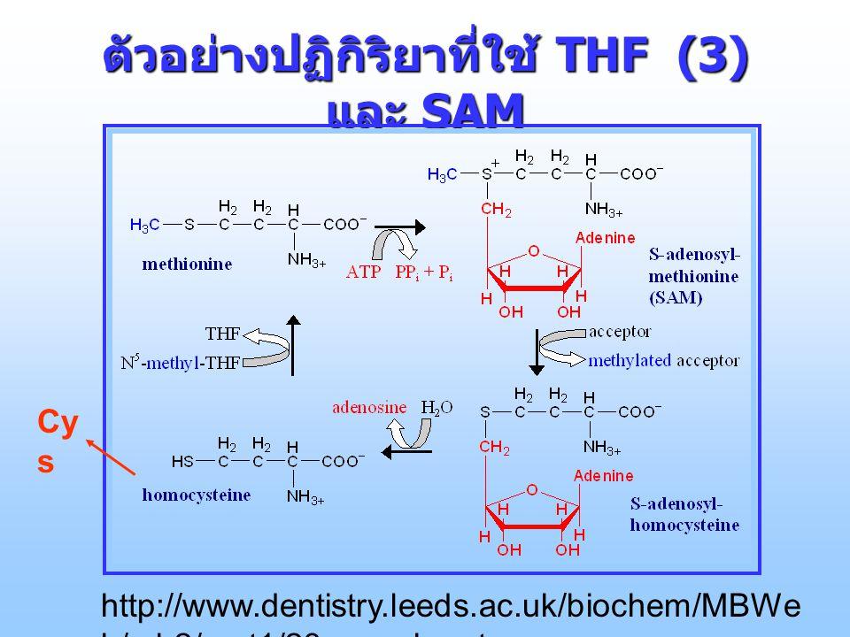 ตัวอย่างปฏิกิริยาที่ใช้ THF (3) และ SAM http://www.dentistry.leeds.ac.uk/biochem/MBWe b/mb2/part1/23-aacarb.ppt Cy s
