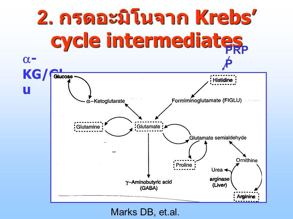 2.2.2 กรดอะมิโนจาก Krebs' cycle intermediates  Marks DB, et.al. p.604, 1996