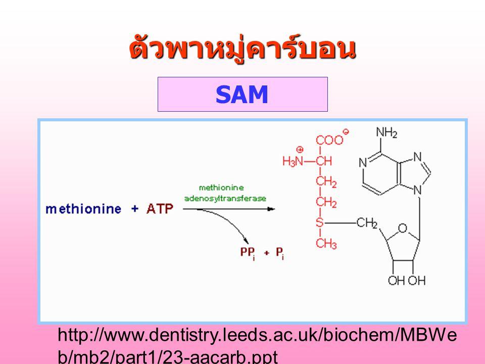 ตัวพาหมู่คาร์บอน SAM http://www.dentistry.leeds.ac.uk/biochem/MBWe b/mb2/part1/23-aacarb.ppt