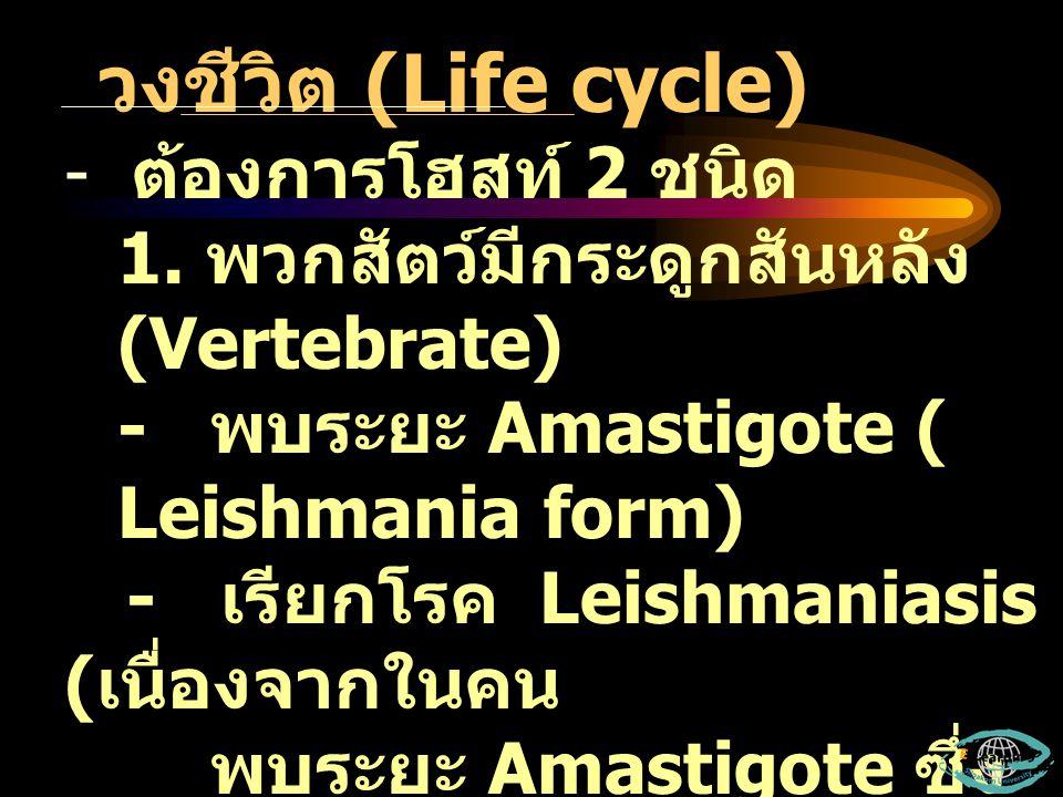 วงชีวิต (Life cycle) - ต้องการโฮสท์ 2 ชนิด 1. พวกสัตว์มีกระดูกสันหลัง (Vertebrate) - พบระยะ Amastigote ( Leishmania form) - เรียกโรค Leishmaniasis ( เ