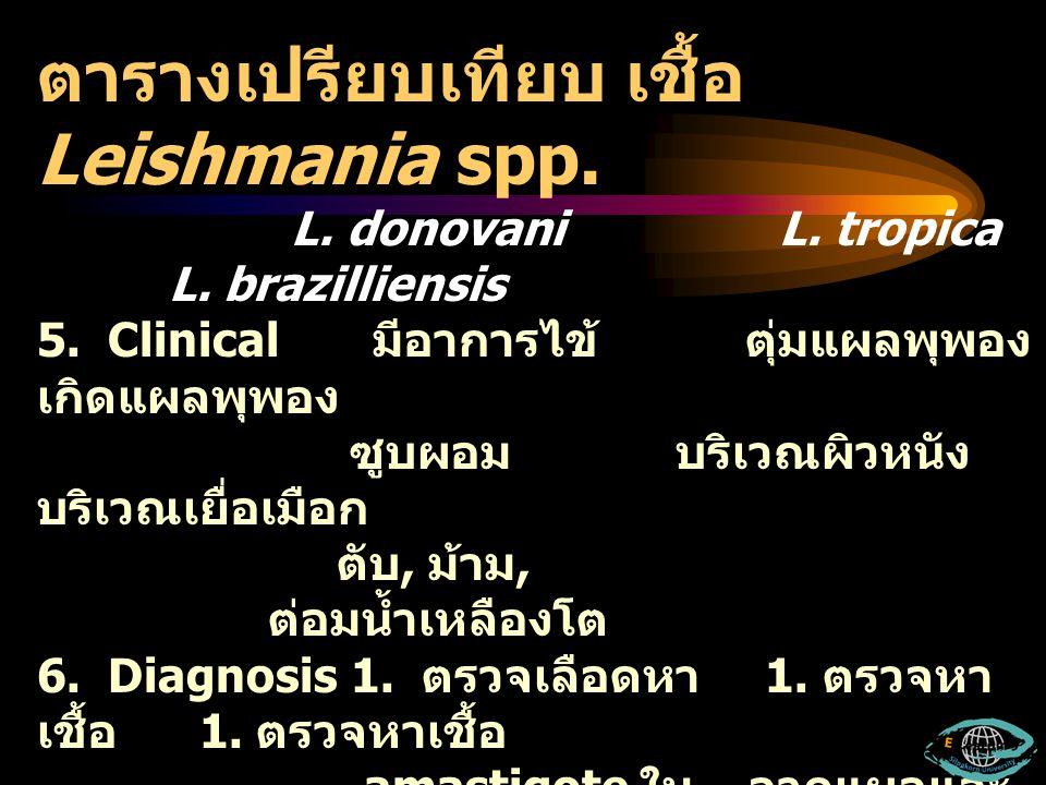 ตารางเปรียบเทียบ เชื้อ Leishmania spp. L. donovani L. tropica L. brazilliensis 5. Clinical มีอาการไข้ ตุ่มแผลพุพอง เกิดแผลพุพอง ซูบผอม บริเวณผิวหนัง บ