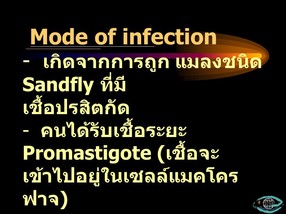 - เกิดจากการถูก แมลงชนิด Sandfly ที่มี เชื้อปรสิตกัด - คนได้รับเชื้อระยะ Promastigote ( เชื้อจะ เข้าไปอยู่ในเซลล์แมคโคร ฟาจ ) Mode of infection