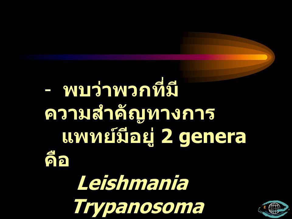 - จัดปรสิตกลุ่มนี้อยู่ใน Suborder Trypanosomatina พบว่า มีรูปร่างแตกต่างกันแบ่งได้ เป็น 4 แบบ คือ 1.