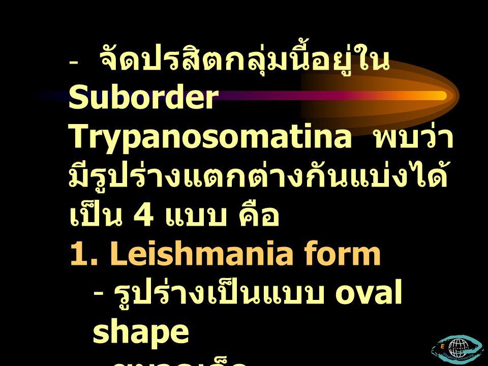- จัดปรสิตกลุ่มนี้อยู่ใน Suborder Trypanosomatina พบว่า มีรูปร่างแตกต่างกันแบ่งได้ เป็น 4 แบบ คือ 1. Leishmania form - รูปร่างเป็นแบบ oval shape ขนาดเ