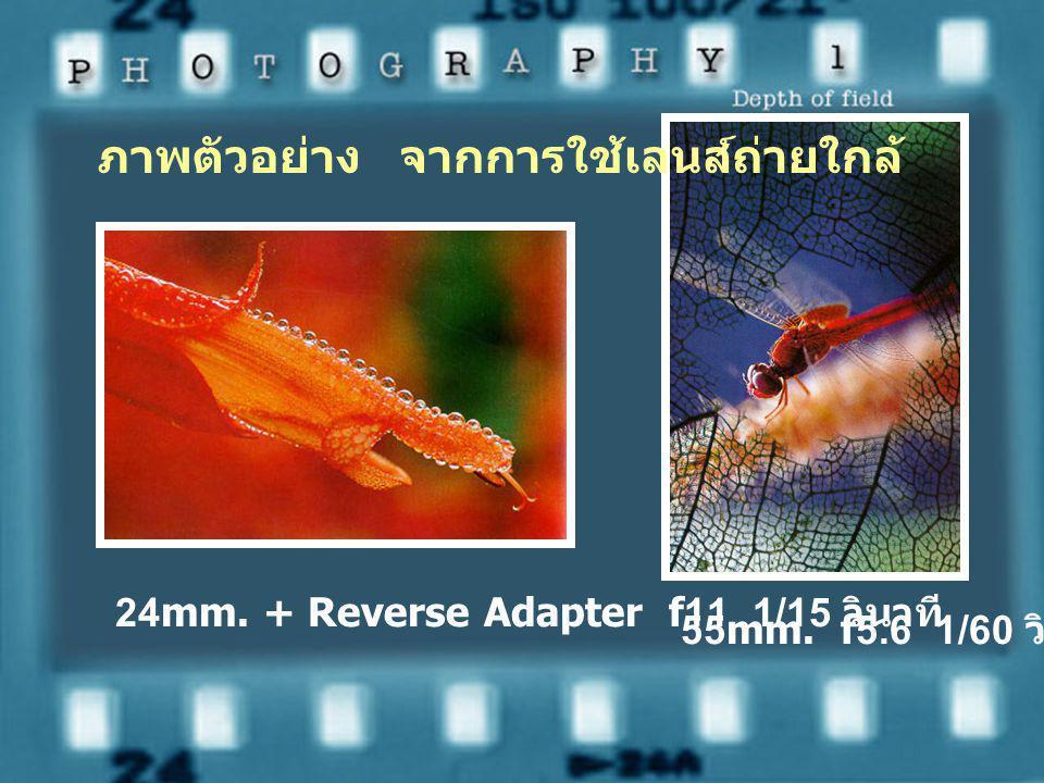 24mm. + Reverse Adapter f11 1/15 วินาที 55mm. f5.6 1/60 วินาที ภาพตัวอย่าง จากการใช้เลนส์ถ่ายใกล้