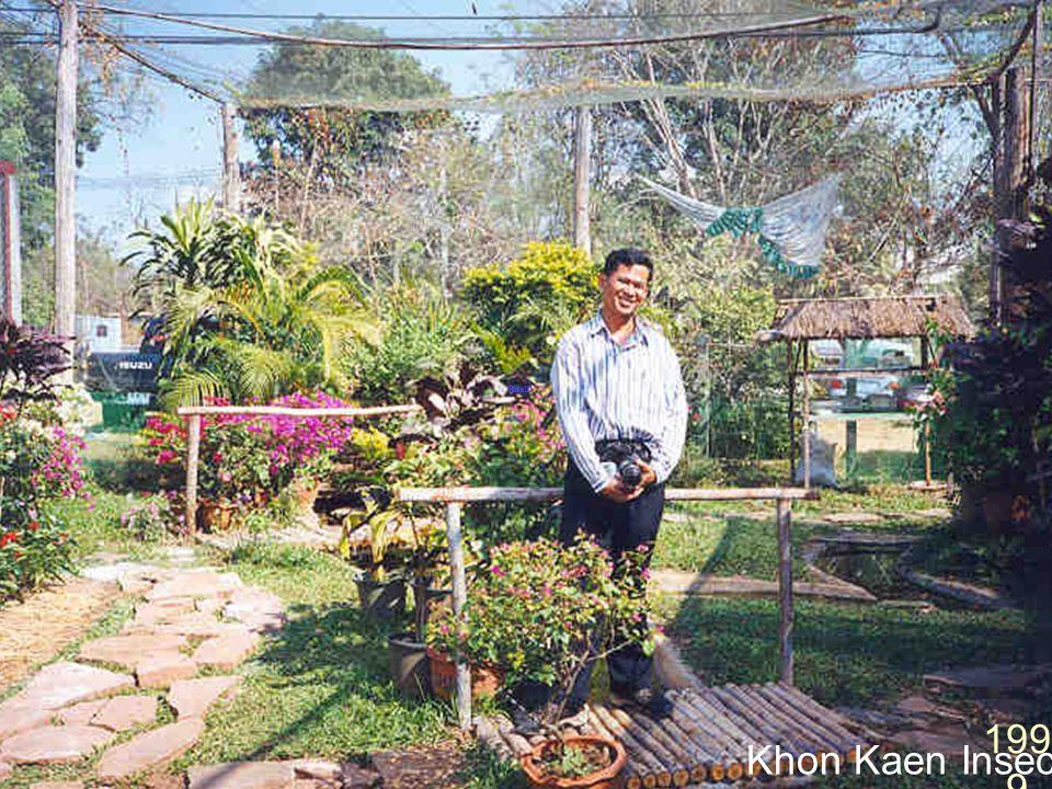 Doi Chiang Dao 1997