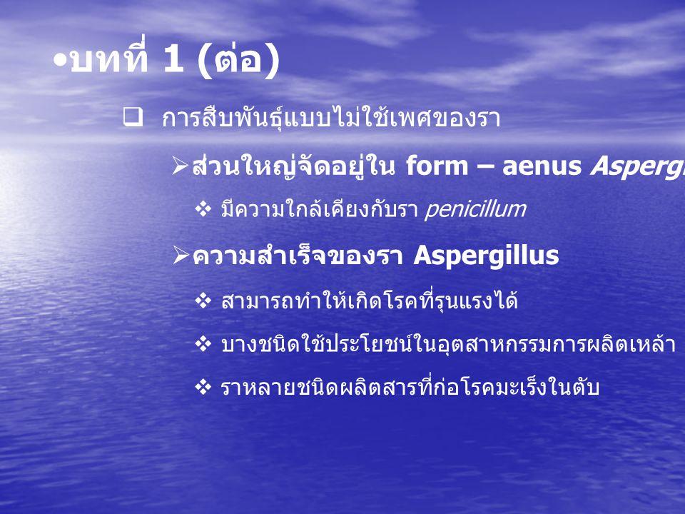 บทที่ 1 ( ต่อ )  นิเวศน์วิทยาและการติดต่อ  เชื้อสุล Aspergillus  เชื้อที่เป็นสาเหตุที่รุนแรงที่สุดคือ  พลได้บ่อยที่สุดตามสิ่งแวดล้อมทั่วโลก  Aspergillus fumigatus และ Aspergillus flavus  สายราชนิดมีผนังกั้นมีแตแขนง  สาเหตุ  รูปร่างลักษณะทั่วไปของเชื้อ Aspergillus  แตกแขนงสร้างเป็นก้านชูสปอร์
