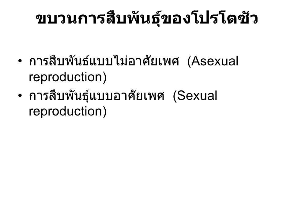 ขบวนการสืบพันธุ์ของโปรโตซัว การสืบพันธ์แบบไม่อาศัยเพศ (Asexual reproduction) การสืบพันธุ์แบบอาศัยเพศ (Sexual reproduction)