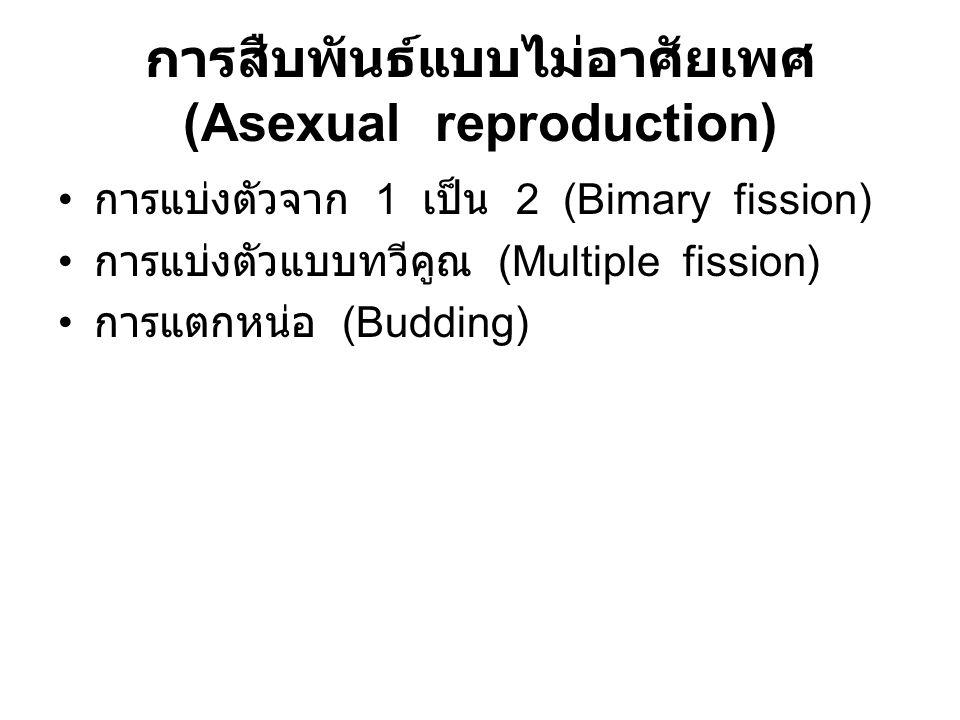 การสืบพันธ์แบบไม่อาศัยเพศ (Asexual reproduction) การแบ่งตัวจาก 1 เป็น 2 (Bimary fission) การแบ่งตัวแบบทวีคูณ (Multiple fission) การแตกหน่อ (Budding)