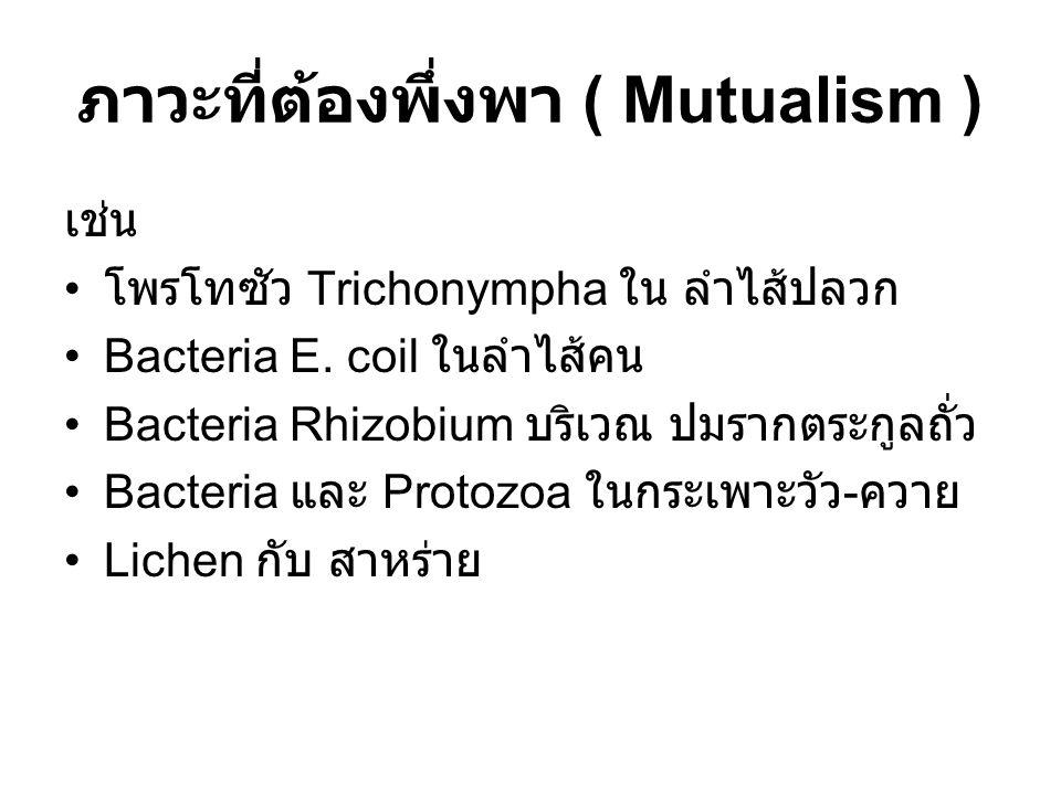 ภาวะที่ต้องพึ่งพา ( Mutualism ) เช่น โพรโทซัว Trichonympha ใน ลำไส้ปลวก Bacteria E. coil ในลำไส้คน Bacteria Rhizobium บริเวณ ปมรากตระกูลถั่ว Bacteria